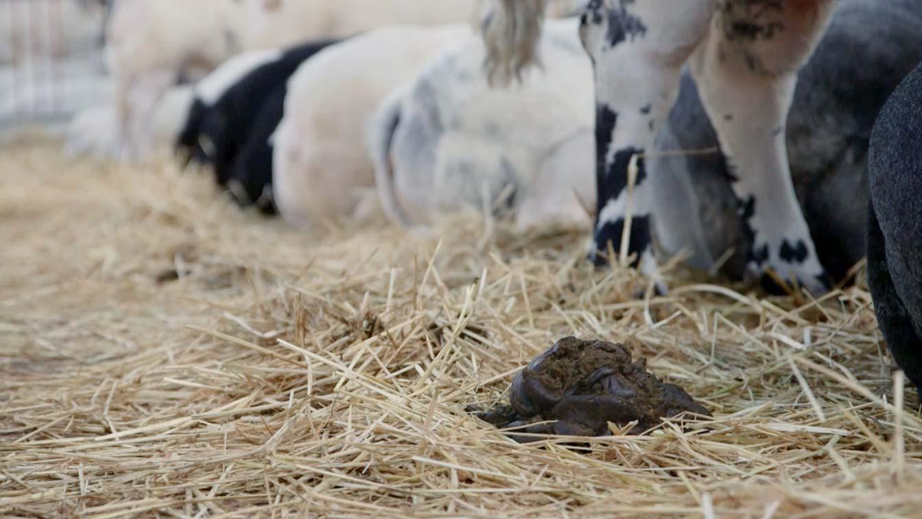 De Leste Mert betekenteen grote dag voorDruten en omgevingin het Land van Maas en Waal. Eeuwenlang wasdit de belangrijksteveemarkt in de regio en was het de laatste gelegenheid voor de boeren om nog voor de winter van hun vee af te komen. Inmiddels is deze noodzaak er niet meer, waardoor de veemarkt is omgedoopt in eenfokveedag metbraderie. De nostalgischekoehandel met het handjeklap behoort totverleden tijd, maar met de mooiste koe valter toch nog wat eer te behalen. Filmmakers Tamino Parren en Barbara de Baareverwonderen zich over deinstandhouding van eentraditie die al lang vervlogen is. Houden deDrutenaren vast aan iets dat er eigenlijk niet meer is? De makers stelden zich de vraag wat de veemarkt nog voorstelt en wie er nog mee begaan is. Het blijkt vooral het boerenhart aan te spreken en een verlangen naar vroeger.Aan de hand vanvierpersonages ontstaat een beeld wat de Leste Mert ooit was en wat er van over is.De toekomstligtin de handen van een stel hobbyboeren, eenslager annex keurmeester en een steeds kleiner wordende commissie.